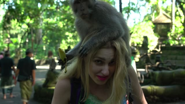 woman interacting with a monkey in bali, indonesia - bali stock videos & royalty-free footage