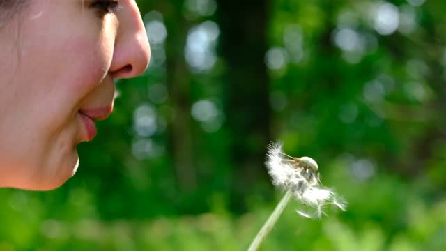 woman is blowing a dandelion flower on june 9, 2021 in redu, belgium. superstitious people think it brings good luck to blow dandelion seeds. - nature stock videos & royalty-free footage