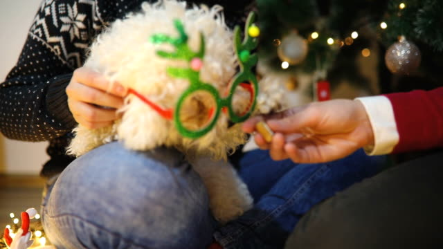 woman is decorating homemade christmas cookies , her pet dog is sitting on her knee - occhiali da vista video stock e b–roll