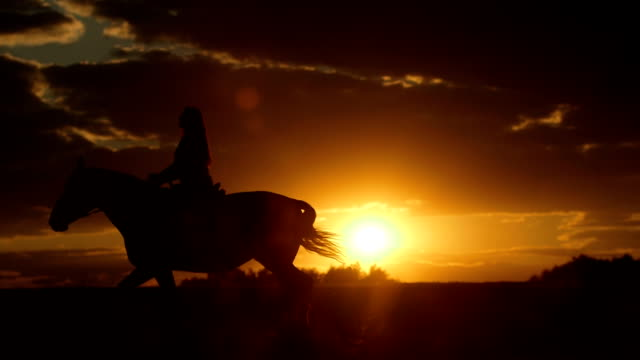 woman is horseback riding to the horizon at sunset - women doing farm animals stock videos and b-roll footage