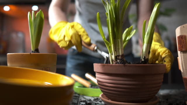 woman is planting pot flowers at home - plant pot stock videos & royalty-free footage