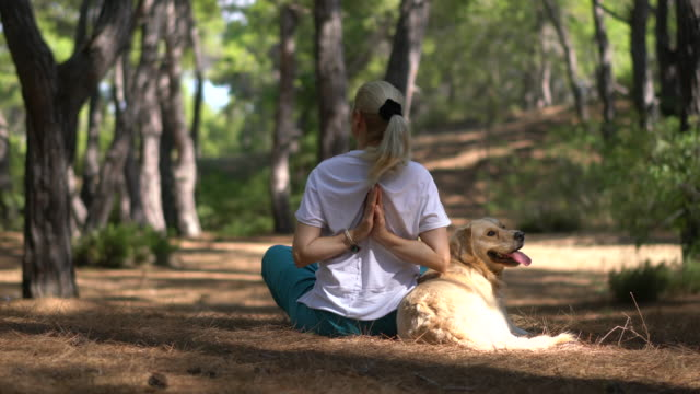 woman is practicing yoga with her dog in forest. - morning exercise stock videos & royalty-free footage