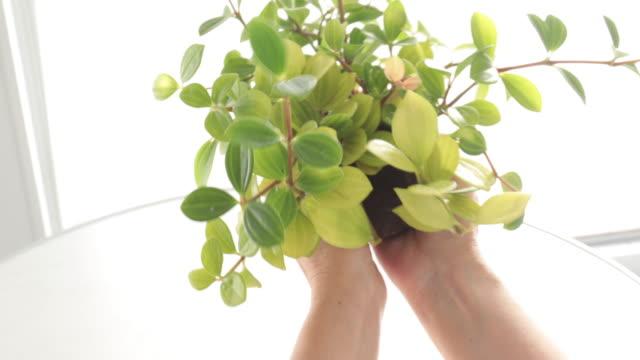 woman is taking care of plants - 園芸学点の映像素材/bロール