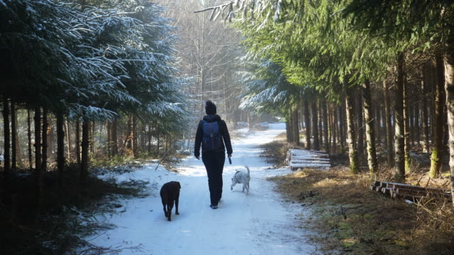 A woman is walking with the dogs