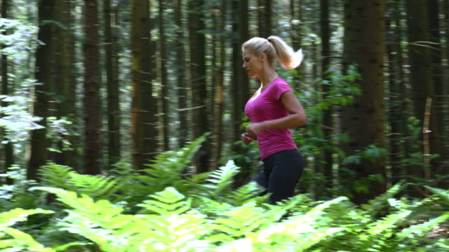 woman jogging in the forest - whole stock videos & royalty-free footage