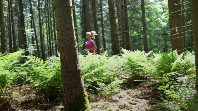 woman jogging in the forest - fern stock videos & royalty-free footage