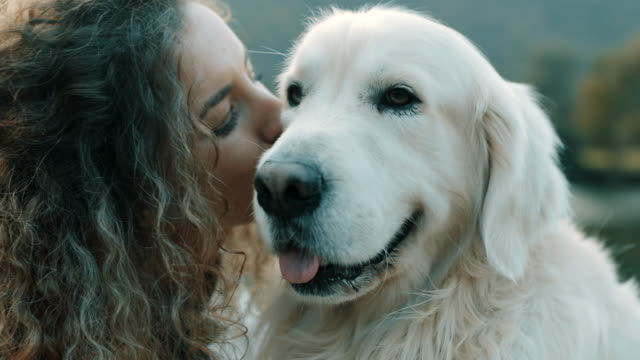 woman kissing a dog - bosnia and hercegovina stock videos & royalty-free footage