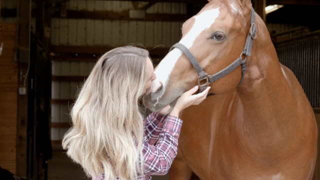 woman kissing her horse - jockey stock videos and b-roll footage