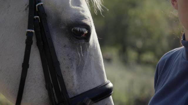 stockvideo's en b-roll-footage met vrouw kussen paard tussen de ogen - alleen één mid volwassen vrouw