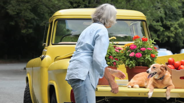 ms tu woman loading potted zinnia flowers into bed of antique pickup truck and petting dog, virginia, usa - pickup bildbanksvideor och videomaterial från bakom kulisserna