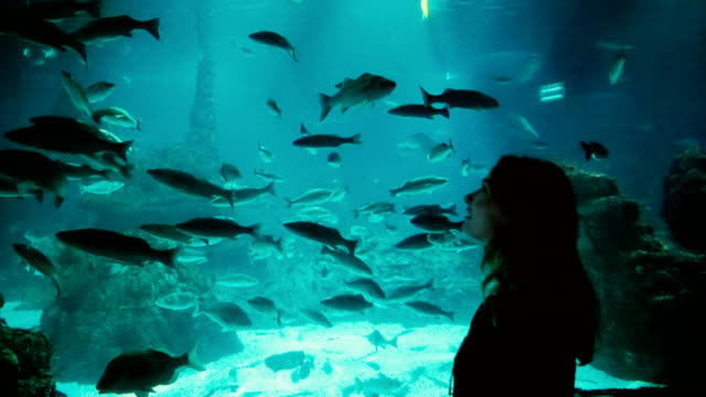 woman looking at fishes in aquarium - aquarium stock videos & royalty-free footage