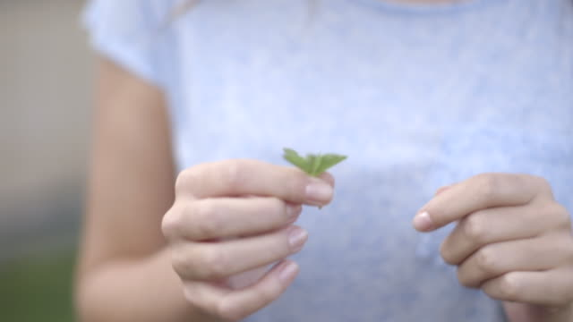 woman looking at four leaf clover - clover leaf shape stock videos and b-roll footage