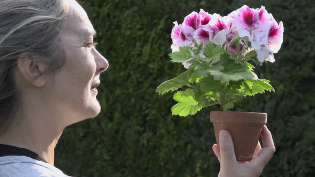 Woman looks and smells blooming geranium