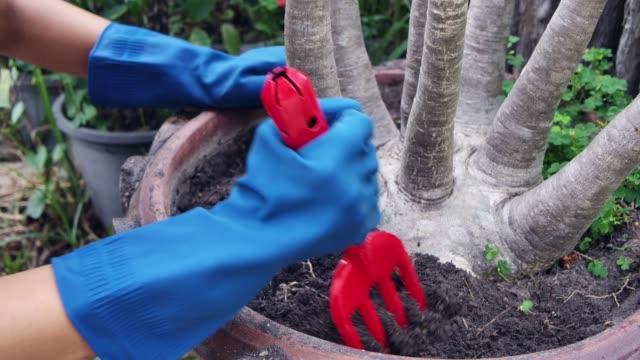 Woman loosen the soil in the flowerpod wearing gardening glove leisure activity