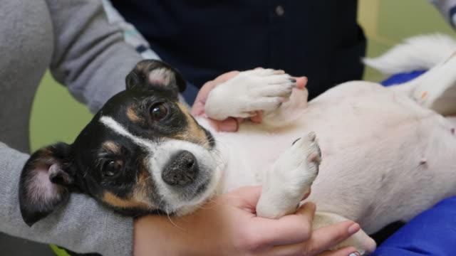 vídeos de stock, filmes e b-roll de mulher faz cão veterinal ultra-som em clínica - ultrassom