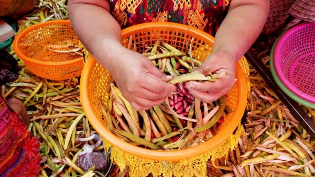 Frau, Marktverkäuferin, Bohnen in einen Korb legen, Antigua Guatemala