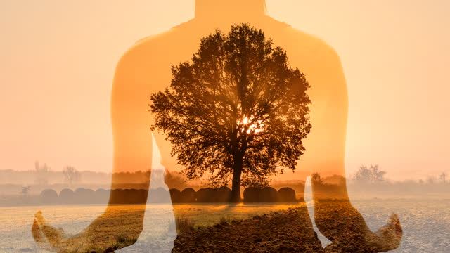 ms woman meditating against a tree in the middle of a meadow at sunrise - lotus position stock videos & royalty-free footage