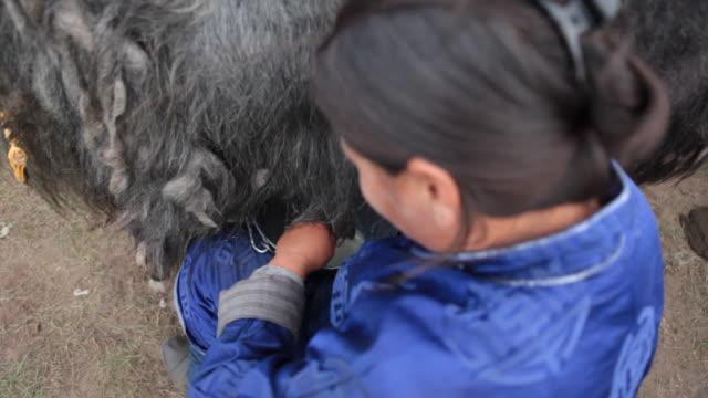 stockvideo's en b-roll-footage met woman milking yak - alleen één mid volwassen vrouw