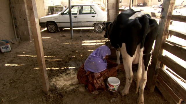 a woman milks a cow in a stall. - milking stock videos & royalty-free footage