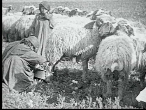 woman milks sheep while girl watches. she shows full pan of sheep's milk - anno 1925 video stock e b–roll
