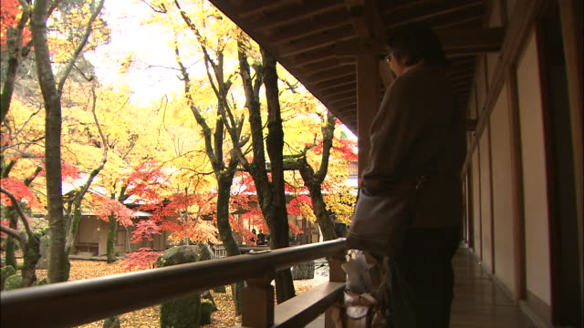 a woman muses as she stands on the veranda of komyo-zenji temple and leaves fall in the inner garden. - fukuoka prefecture stock videos & royalty-free footage