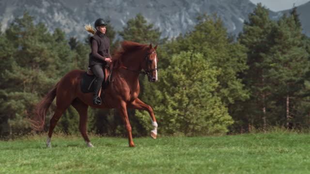 SLO MO vrouw op een bruin paard galopperen over een zonnige berg weide