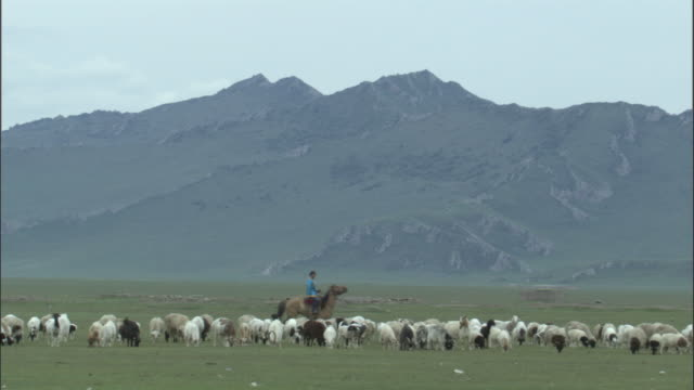woman on horseback rides past sheep , bayanbulak grasslands. - herder stock videos & royalty-free footage