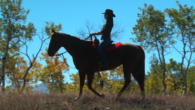 woman on horseback - andere clips dieser aufnahmen anzeigen 1139 stock-videos und b-roll-filmmaterial
