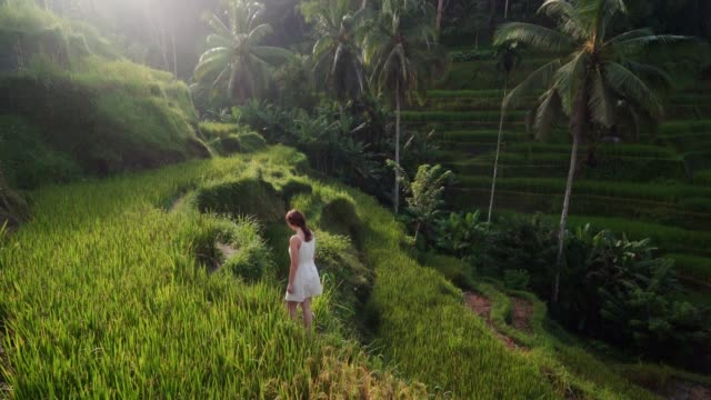 vidéos et rushes de femme sur le champ de riz de tegallalang sur bali, indonésie - rizière