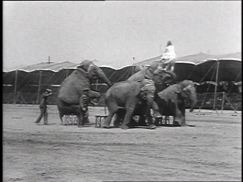 1930 montage woman performing with circus elephants, may 17, 1930 / philadelphia, pennsylvania  - circus stock videos & royalty-free footage