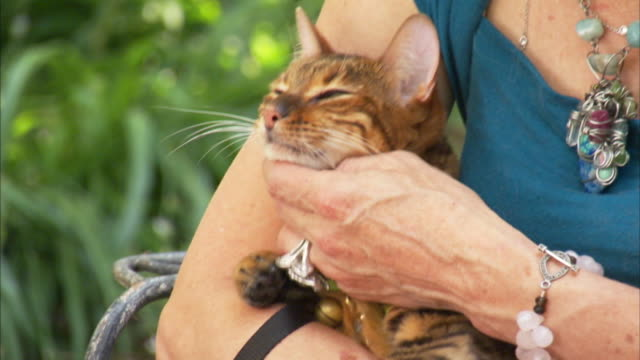 a woman pets her cat. - pet owner stock videos & royalty-free footage