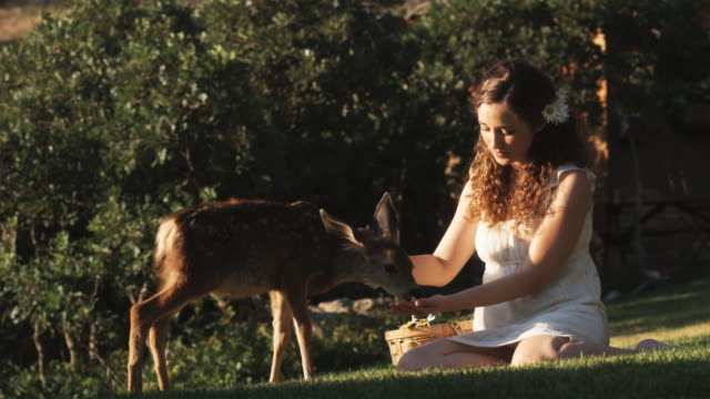 woman petting a fawn - fawn stock videos & royalty-free footage