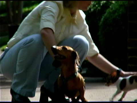woman petting dogs outdoors - cagnolino da salotto video stock e b–roll