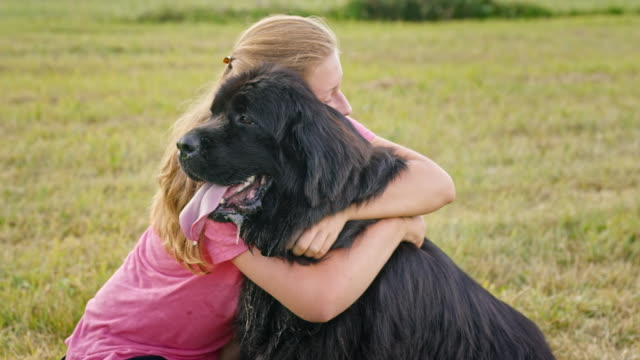 SLO MO Woman petting her Newfoundland dog in meadow