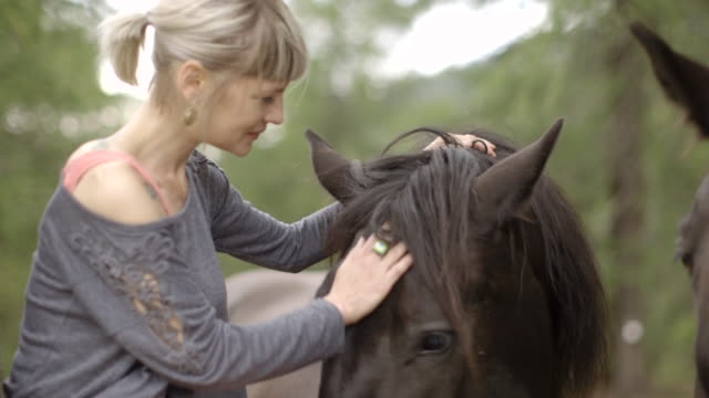 woman petting horse - stroking stock videos & royalty-free footage