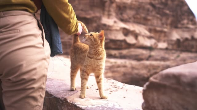 Woman petting kitten near Petra