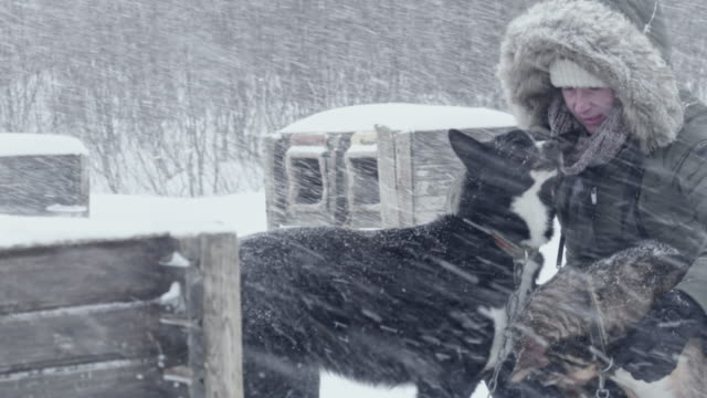 ls woman petting sled dogs - sled dog stock videos & royalty-free footage