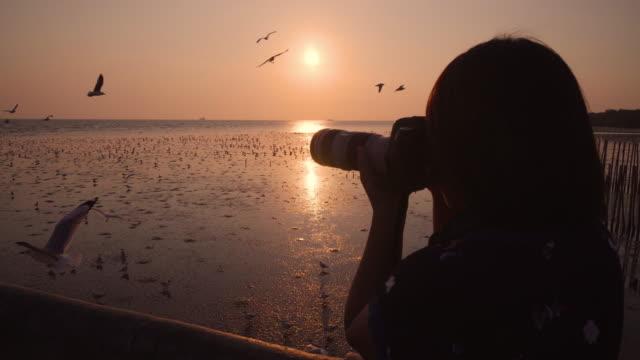 vídeos de stock e filmes b-roll de woman photographer sunset with bird - fazer