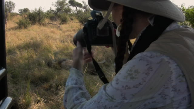 cu, woman photographing lion (panthera leo) sleeping in grass, botswana - photographing stock videos & royalty-free footage