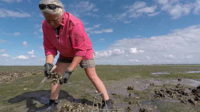 woman pick oysters - arcachon stock videos and b-roll footage