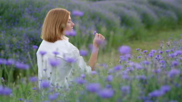 ds woman picking cornflowers - only mid adult women stock videos and b-roll footage