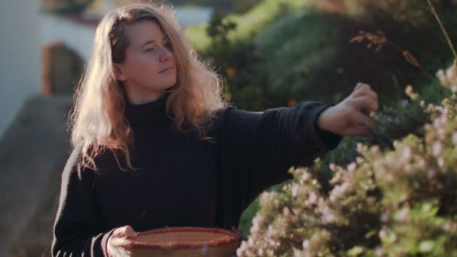 woman picking fresh herbs on patio - pflücken stock-videos und b-roll-filmmaterial