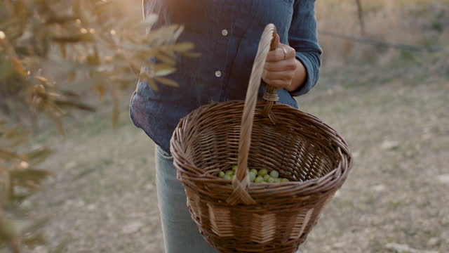 woman picking olives into basket - freschezza video stock e b–roll