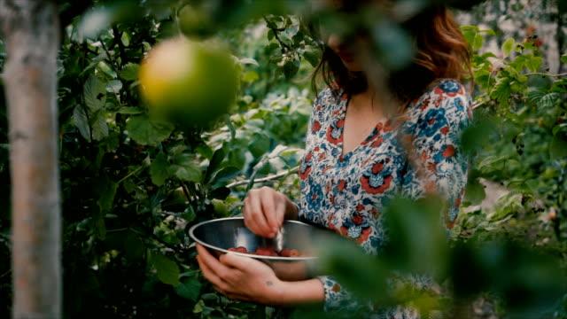 vídeos de stock, filmes e b-roll de framboesa de colheita de mulher na zona rural - framboesa