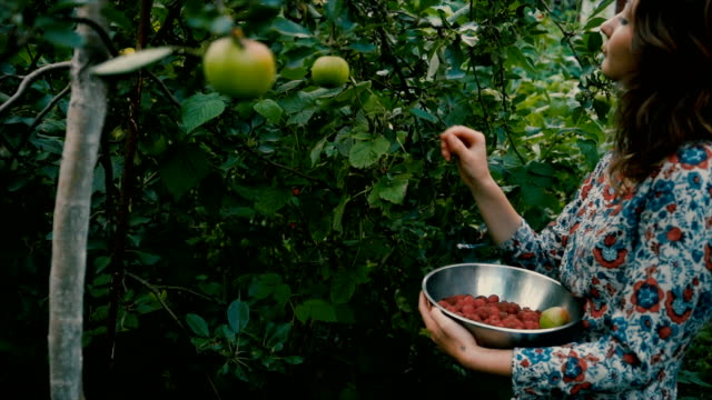 woman picking raspberry in the countryside - picking harvesting stock videos and b-roll footage