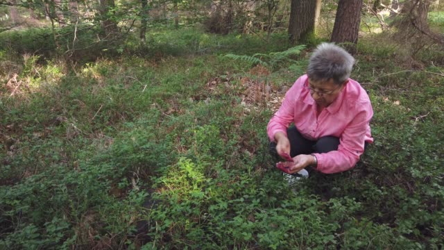 woman picking wild blueberries in the forest, vaccinium myrtillus - germany stock videos & royalty-free footage