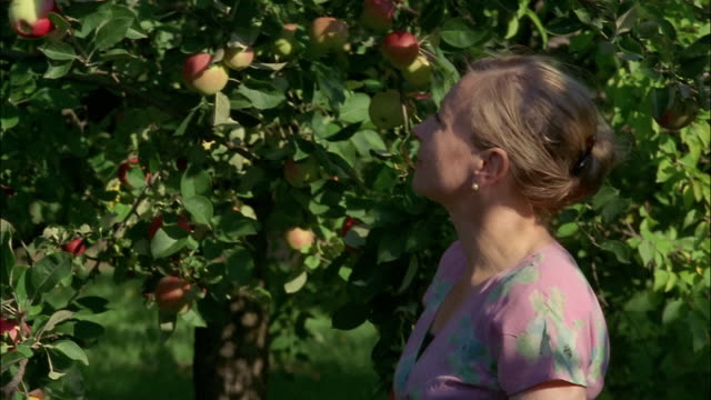 A woman picks an apple from a  tree and bites into it.