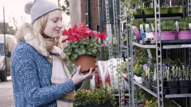 woman picks up a cyclamen plant and smells the scent of the flowers. - pot plant stock videos and b-roll footage