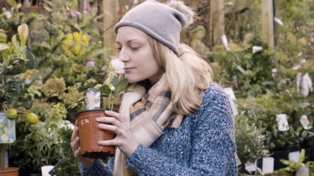 Woman picks up a Hellebore plant and smells the flower in garden centre.