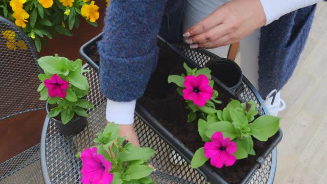 花の花を花鉢に植える女性 - 園芸学点の映像素材/bロール